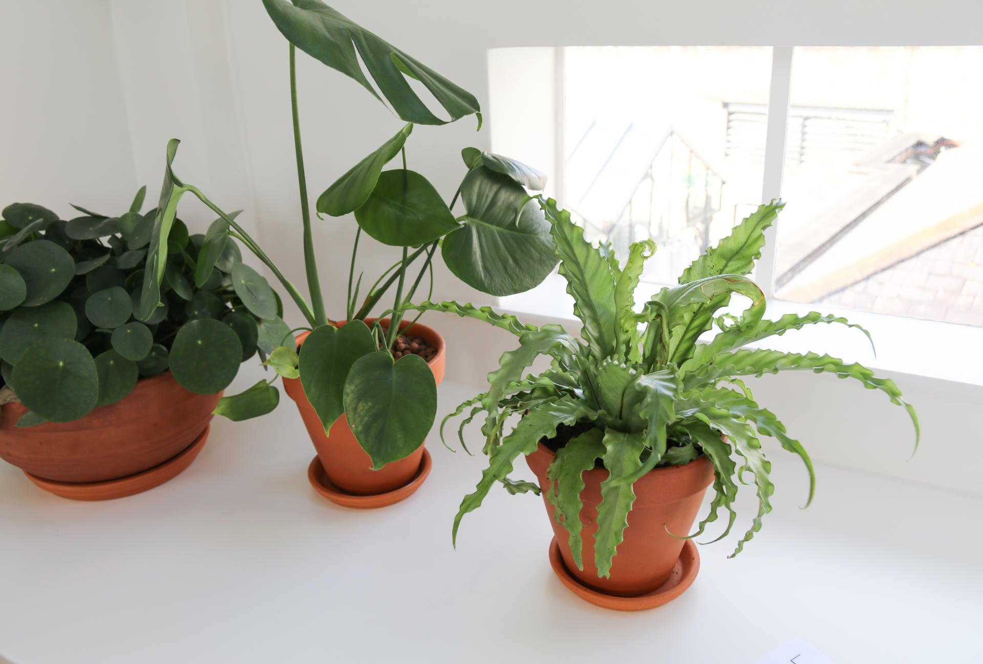 How Plants Can Increase Productivity In The Workplace Labs
